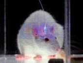 Laser Optogenetics and Neuroscience